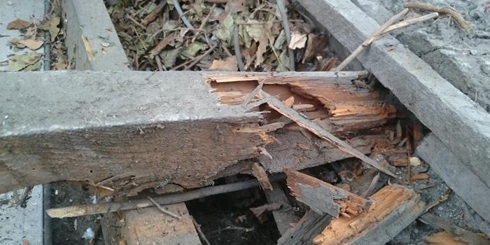 bois attaqué par insectes xylophages